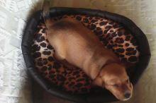 Pelech pro psa Argi oválný s polštářem - černý se vzorem - 57 x 49 x 16 cm