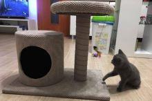 Škrabadlo pro kočky Argi - Palma - šedé - 57 x 40 x 60 cm