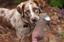 ŠTĚNĚCÍ SERIÁL 6. Zábava a cestování s psím juniorem