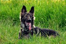 10 nejčastějších nástrah, které na psa číhají v létě