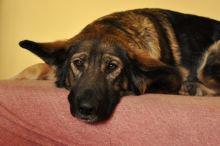 Pes v létě - zásady první pomoci