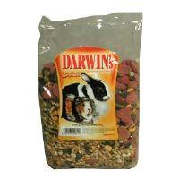 Darwin's morče,králík standard