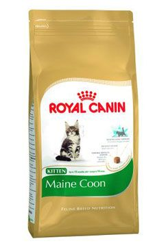 Royal Canin Breed Feline Kitten Maine Coon