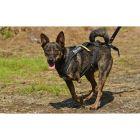 Scamp - rozhovor s majiteli třínohého psa