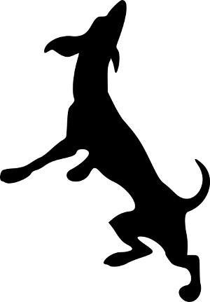 Podle aktivity psa