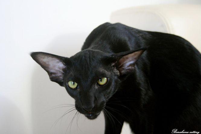 černá kočička ebony.com horké bez sedla gay porno