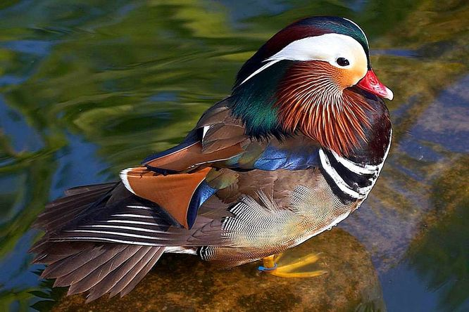 Nejkrasneji Zbarveni Ptaci Sveta Labet Cz