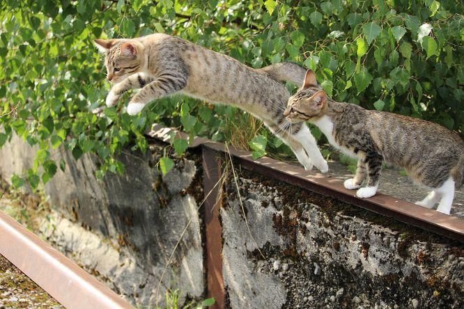Malá kočička díra