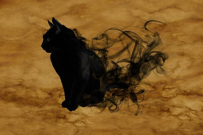 Pevně suchá kočička