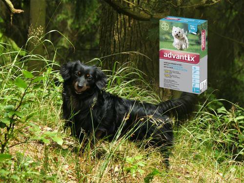 Antiparazitní pipeta Advantix pro psy 4-10 kg
