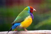Nejkrásněji zbarvení ptáci světa