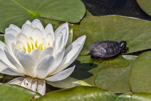 Nemoci vodních želv