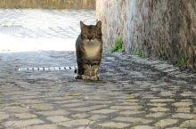 Pomáháte kočkám bez domova?