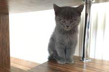 Naše první koťátko, připravte se na něj