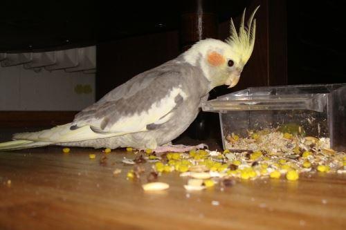 Apetit malý a střední papoušek 1kg