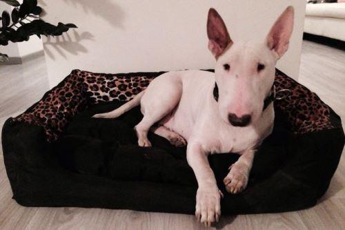 Pelech pro psa Argi obdélníkový s polštářem - černý se vzorem