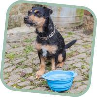Miska pro psa, cestovní, BecoBowl Travel-blue L, EKO