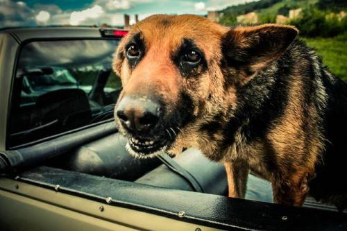 Cestování se psem aneb Jak vybavit svého mazlíčka na dovolenou