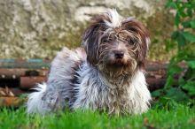 Změny, které psům přináší jaro