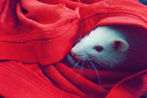 Pořiďte si bílou myšku