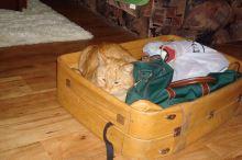Cestování s kočkou - 1. část - Než vyrazíte na cesty