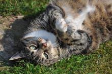Obezita u koček