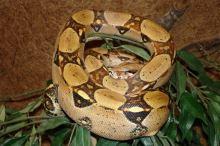 Jakého hada si zvolit pro chov 6164f0e317