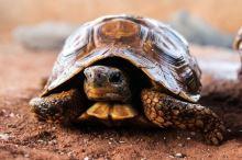 Jakou suchozemskou želvu si vybrat?