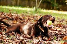 Jak unavit aktivního psa?