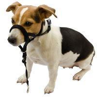 Halti Nylonová ohlávka pro psy - velikost 2, krk 33-45 cm