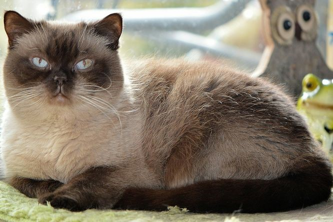 Velká mokrá krémová kočička