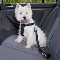 Jak vybrat přepravku pro psa do auta