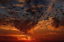 Jak lidé ovlivňují život ptáků?