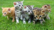 Kočky a vnější parazité a jak proti nim bojovat