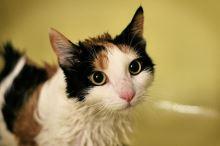 Jak vykoupat kočku