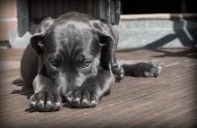 Pomoc, náš pes má klíště! Co dělat a čemu se raději vyhnout?