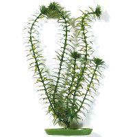 Rostlina MARINA Anacharis 13 cm