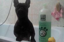 Menforsan Zklidňující hojivý přírodní šampon pro psy s Aloe Vera