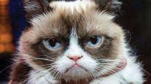 Nejznámější kočky světa