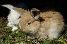Vychytávky do klece pro zakrslé králíky