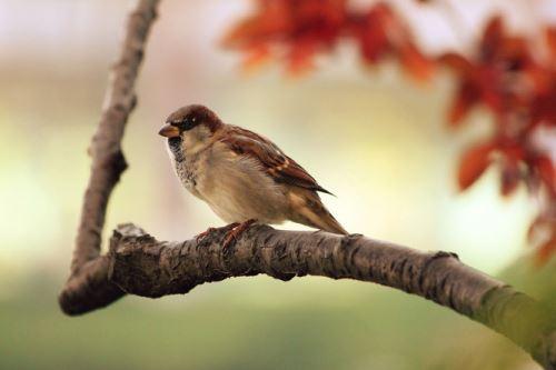 Jak pomoci zraněnému ptáku