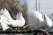 Ptáci předmětem pověr a povídaček