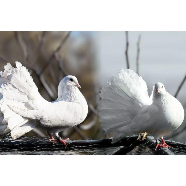 Krmítko Talíř - venkovní plastové - Antracit Pozorování ptáku je zábava nejen pro.