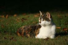 Cestování s kočkou - 2. část - Výbava na cesty