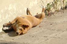 Pes a léto. Jak mu ho zpříjemnit?