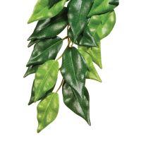 Rostlina EXO TERRA Ficus
