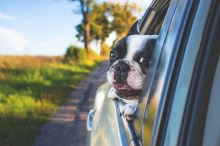 Jak si poradit s dlouhým cestováním spolu se psem