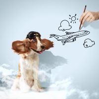 Jak vybrat přepravku do letadla