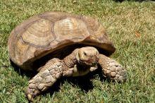 Péče o krunýř suchozemských želv