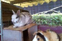 Králík a další zvířata v jedné kleci